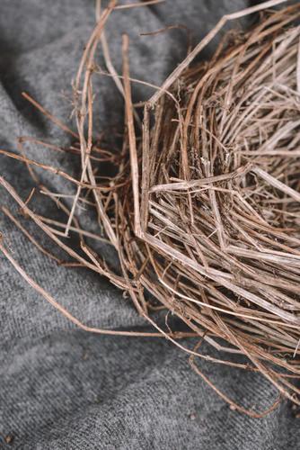 Sparrow's nest.