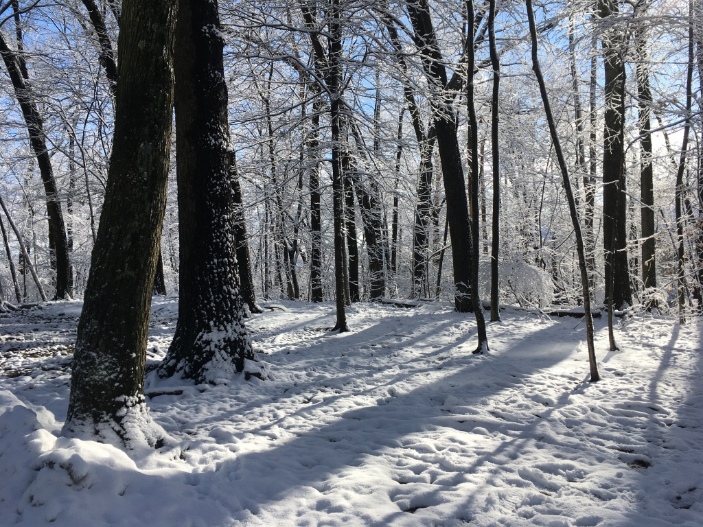 Woods filled with snow.