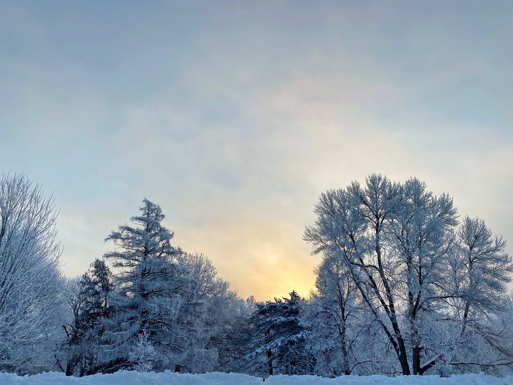 Sunset over snow-covered trees