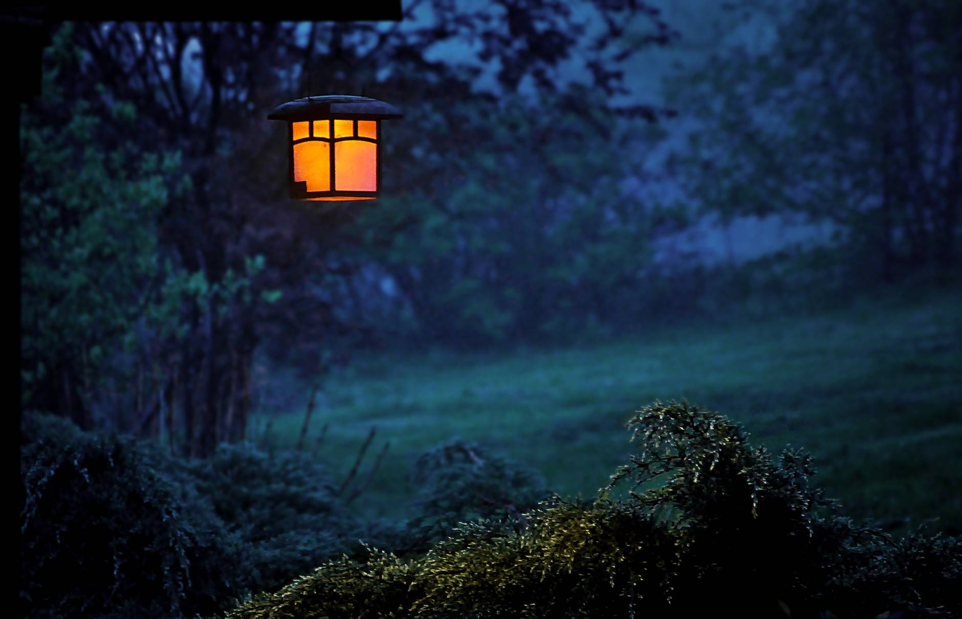 Lantern in the woods