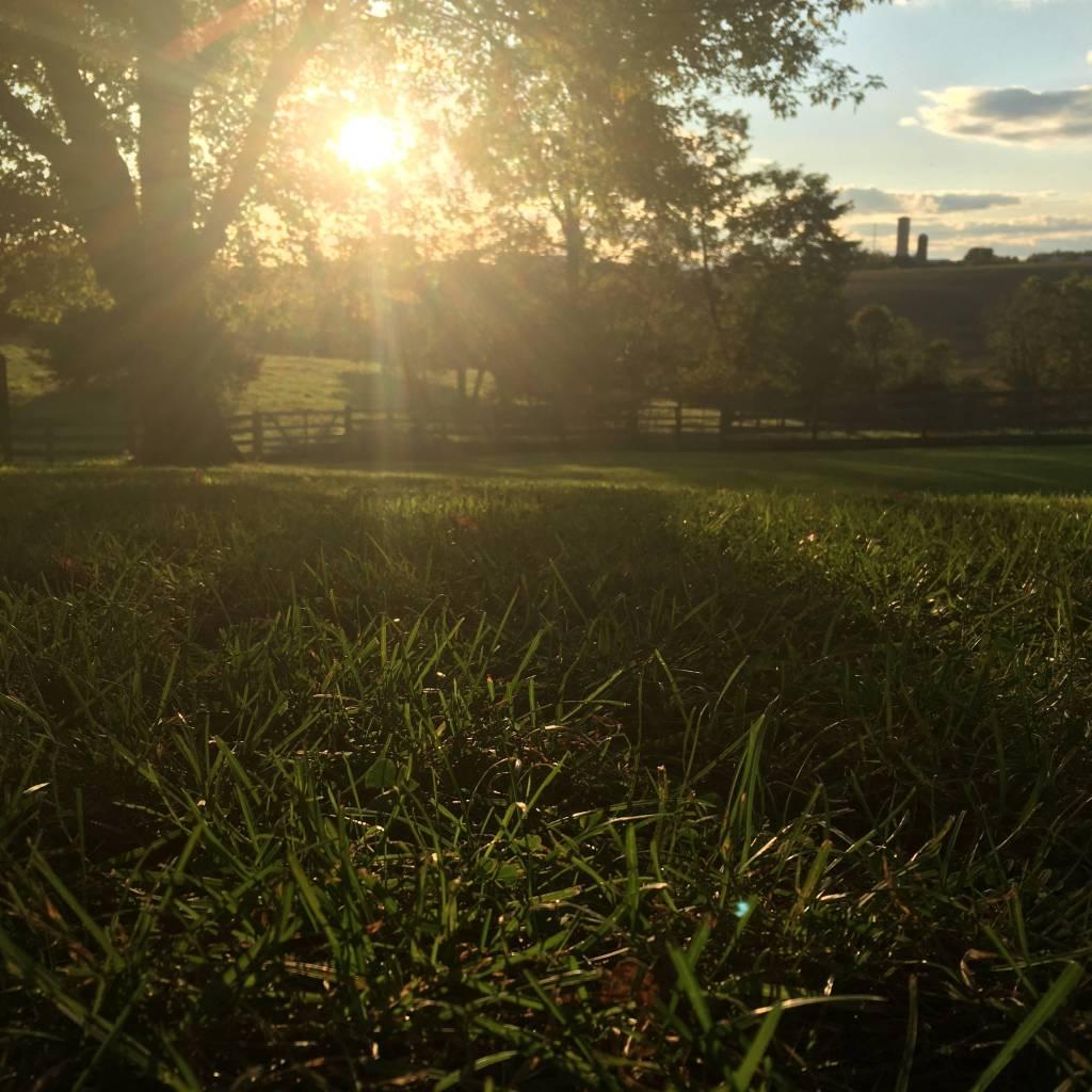 Sun on a green field